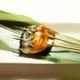魚串 サバの田楽串