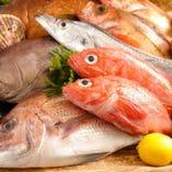 富山県氷見直送の鮮魚【富山県】