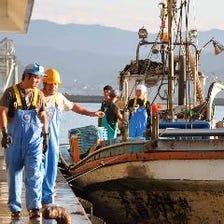 富山金沢より水揚げされる鮮魚