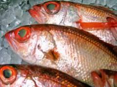 魚一番 新