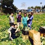 生産者の方を直接訪問して、美味しい野菜を発掘しています!