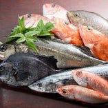 日替わりのおすすめ鮮魚