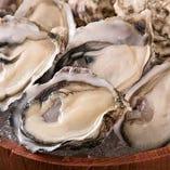 プレミアム食べ放題なら生牡蠣やマグロ刺身なども楽しめます!