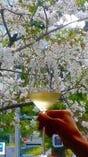 店の前には桜があります。座ったままの乾杯。春は人気。