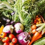厳選した旨味、抜群の『京野菜』をお届けします。【京都府】
