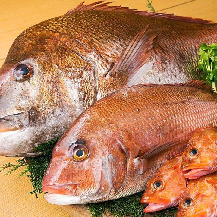 愛媛や島根・築地などから仕入れた鮮魚を使用した料理をどうぞ