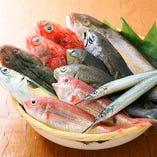 ◆築地から直送した鮮魚【築地から取り寄せた新鮮な鮮魚】