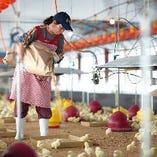 【自社の養鶏場】 肥料から開発し快適な環境で育つ自慢の華味鳥
