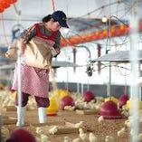 快適な環境の鶏舎で大切に育てた鶏