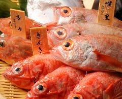 本日の漁港直送鮮魚