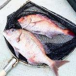 沼島盛漁丸の天然鯛【兵庫県南あわじ市】