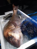 魚介類は全て天然物。旬の食材を御提供しております。