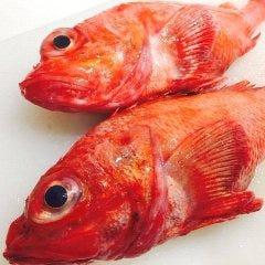 魚酒肴 くぅ