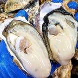 宮城県の漁師さん直送のトロ牡蠣、チチコイ牡蠣【宮城県】