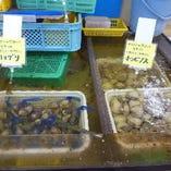 食べ放題用 水槽から選べる 焼ハマグリ or 焼ホンビノス貝