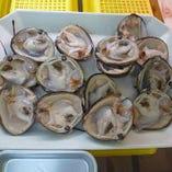 食べ放題用限定メニュー ほっき貝