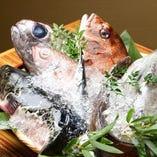 北陸からの直送鮮魚【氷見漁港】