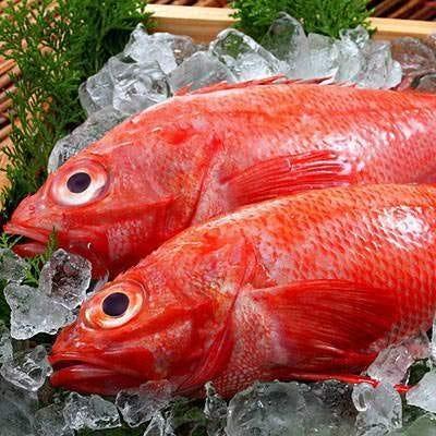 【超特価】高級魚キンキが500円!