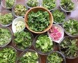 """契約農家さんから届く約40種の野菜が楽しめる""""ガーデンサラダビュッフェ"""""""