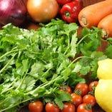 新鮮野菜とパクチー【千葉県】