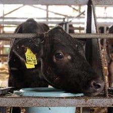 契約牧場「満天牧場」満天和牛の紹介