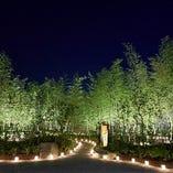 幻想的な竹林エントランスの夜景