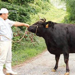 長期肥育で熟成された近江牛 爽やかな風味ととろける甘みが絶品