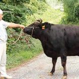 自家牧場で育てた「純近江牛」。やわらかくとろける甘みは絶品