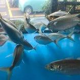 【生け簀を完備】 当店で使用している魚介類は全て鮮度抜群!