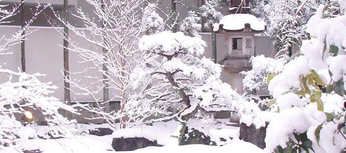 季節を感じる 【冬の庭園】