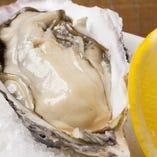 毎日仕入れる新鮮な牡蠣をお楽しみ下さい。