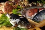 福岡中央市場より毎朝4時直送! 鯛、関アジ、カンパチ、ヒラメ、桜鯛、キス、カサゴ、赤貝、イカ、トビウオ、カワハギ、ふぐ