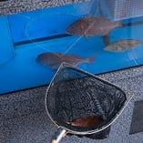 生簀から上げたての新鮮な魚をご提供