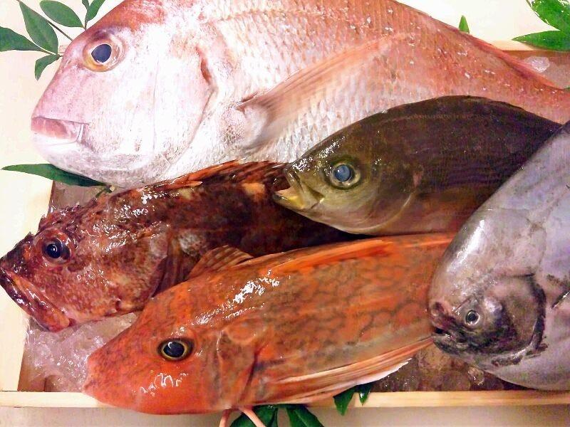 新長崎漁港直送鮮魚!