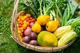 自然の恵みを受けたやんばるの食材をお楽しみ下さい!