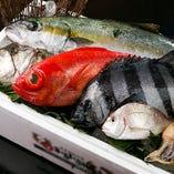 【こだわりの鮮魚】 鮮度抜群の旬の魚介をご用意しております!
