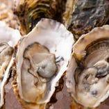 【特大岩牡蠣】 三重県は伊勢契約漁港直送他にはない特大サイズ