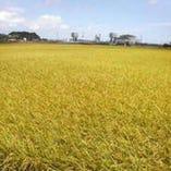 水郷の町佐原の美味しいお米を自家栽培しています。