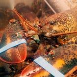 超新鮮!海鮮焼きも充実!オマール海老は活で仕入れています。