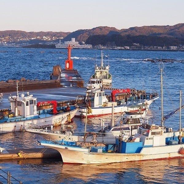 三崎長井漁港から直送した鮮魚を堪能