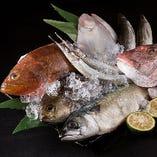 玄界灘で獲れた新鮮な魚!お刺身、煮魚、焼き魚でご堪能いただけます!