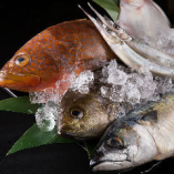 玄界灘の荒波で育った味わい豊かな魚