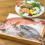 豊洲から取り寄せた新鮮な鮮魚【お造りや鯛しゃぶなど様々な調理法で】