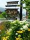 花満開の夏、お店周りを散策してみてください。
