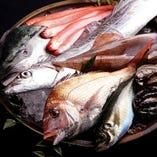 ■全国各地の漁港より直送【★】