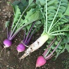 スタッフの実家から毎日直送の野菜