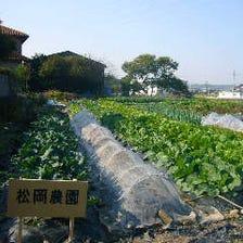 農家さんが丹精込めて作った新鮮野菜