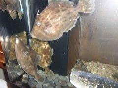 天然鮮魚 隠れ和食 ぶらん家の画像その1