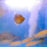 水槽の活魚は鮮度、味に自信あり!