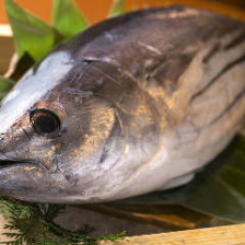 高知県から直送の新鮮鰹